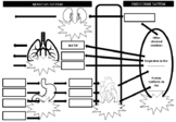 Interdependence of Body Systems Worksheet