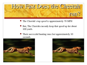 Interesting Facts About the Cheetah
