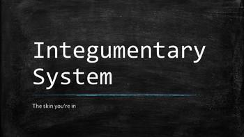 Intergumentary System