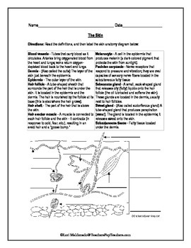 Worksheets Skin Diagram To Label integumentary system skin diagram to label by lori maldonado label