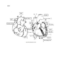 Internal External Human Heart Labeling with KEY