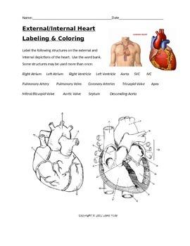 Internal External Human Heart Labeling with KEY