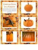 Internal & External Parts of a Pumpkin - Fall/Botany Lesson(s)