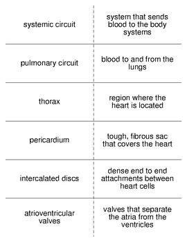 Internal Fluids Vocabulary Flash Cards for Zoology