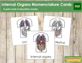 Internal Organs Nomenclature Cards