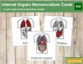 Internal Organs Nomenclature Cards (Red)