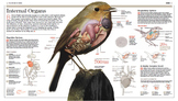 Internal Organs of a Bird