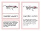 Internal Parts of a Butterfly - Montessori Four-Part Cards