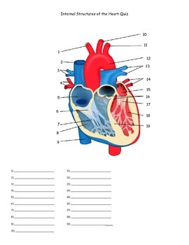 Internal Structures of the Heart Quiz