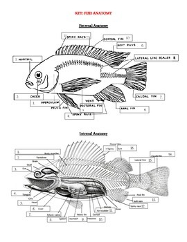 Internal and External Fish Anatomy - label and color