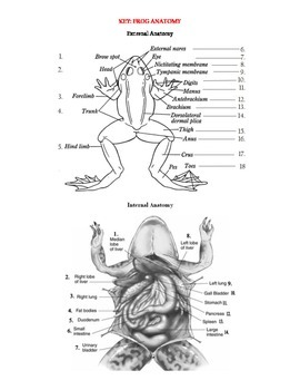 Internal and External Frog Anatomy Label and color the various parts ...