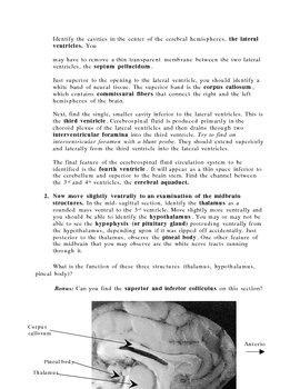 Internal sheep brain dissection guide