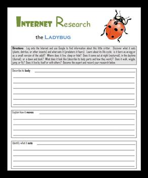 Internet Research:  Insects, Bugs and Spiders