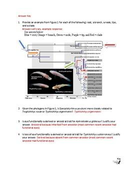 Interpreting Evolutionary Histories Worksheet