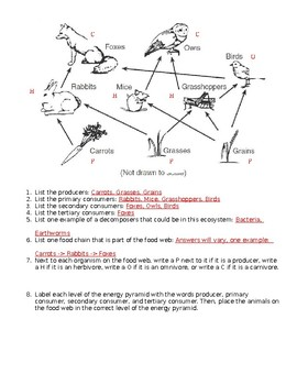 Interpreting a Food Web Worksheet