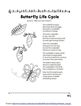 Into the Life Cycle of a Butterfly
