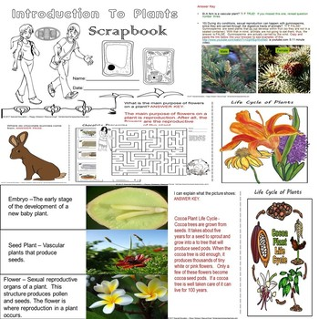Intro To Plants Quiz/Assessment/Homework SPED/ELL/Autism