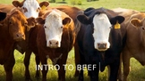 Intro to Beef Terms PPT