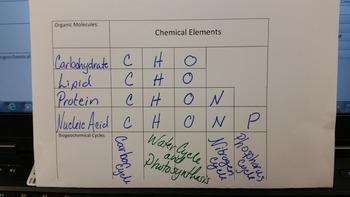 Intro to Biogeochemical Cycles