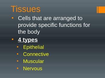 Intro to Body Tissues