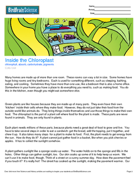 Intro to Cells, Inside the Chloroplast - Engaging Science Reading