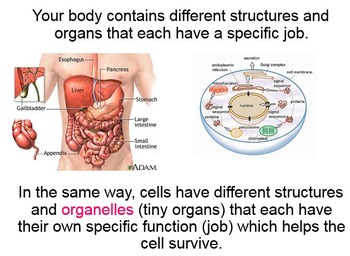 Intro to Cells and the Cell Theory PPT