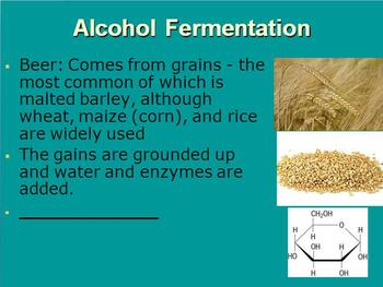 Introduction to Cellular Respiration and Fermentation - Biology PowerPoint