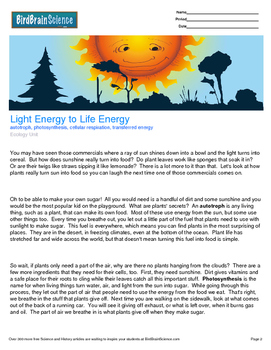 Intro to Ecology, Light Energy to Life Energy - Engaging Science Reading