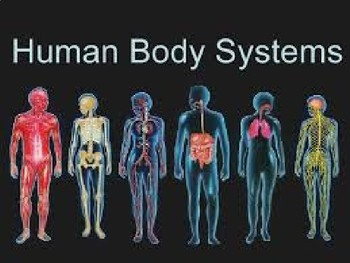 Intro to Human Body Systems