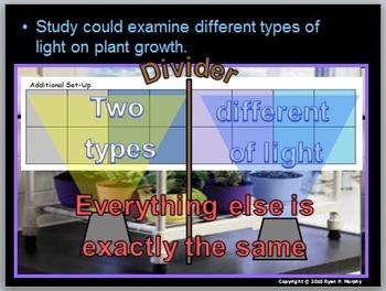 Plants Lesson, Student Plant Projects