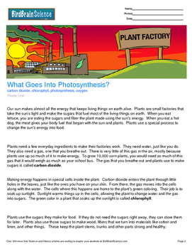 Intro to Plants, What Goes Into Photosynthesis - Engaging Science Reading