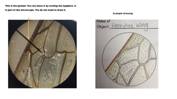 Intro to Primary Microscopes - Microscope View Example