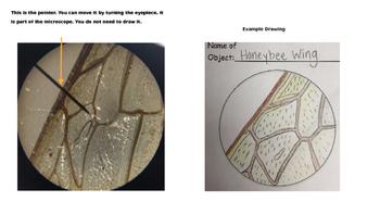 Intro to Primary Microscopes - Microscope View Example