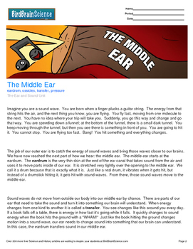 Intro to The Ear and Sound, The Middle Ear - Engaging Scie