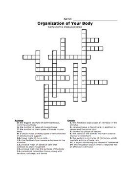 Intro to the Body Crossword