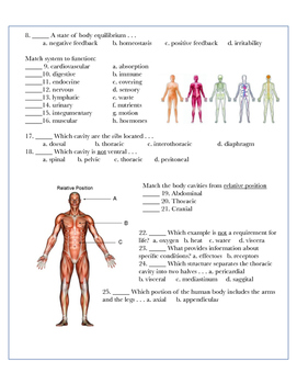 Intro to the Human Body w/key