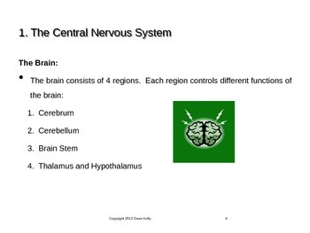 Intro to the Nervous System PPT