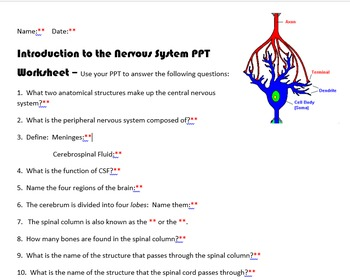 Intro to the Nervous System PPT Worksheet with KEY