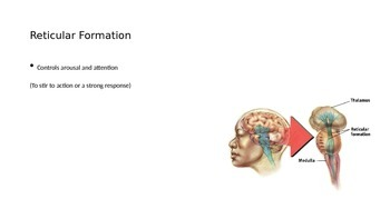 Intro to the brain powerpoint