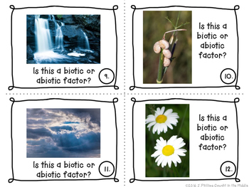 Introducing Biotic/Abiotic Factors