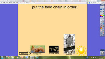 Introducing Food Chains
