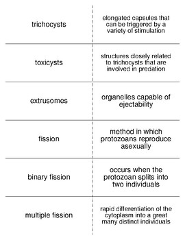 Introduction and Characteristics of Protozoans Flash Cards for Invertebrate Bio.