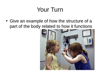 Introduction to Anatomy PowerPoint