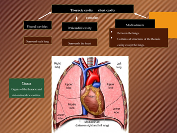 Introduction to Anatomy and Physiology (Chapter 1) Part 2