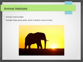 Introduction to Animal Habitats