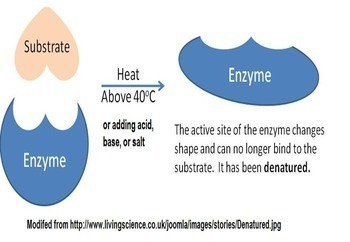 Introduction to Biochemistry and Enzymes Lesson Activities