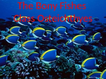 Introduction to Bony Fish