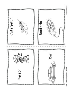 Introduction to Cells -Middle School