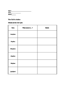 Introduction to Cells:  Set of Graphic Organizers
