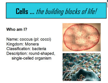 Introduction to Common Bacteria and Protista Flipchart